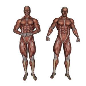 Stoffwechsel ankurbeln - muskulatur