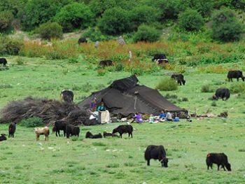 Abnehmen durch Gehen - wie früher die Nomaden